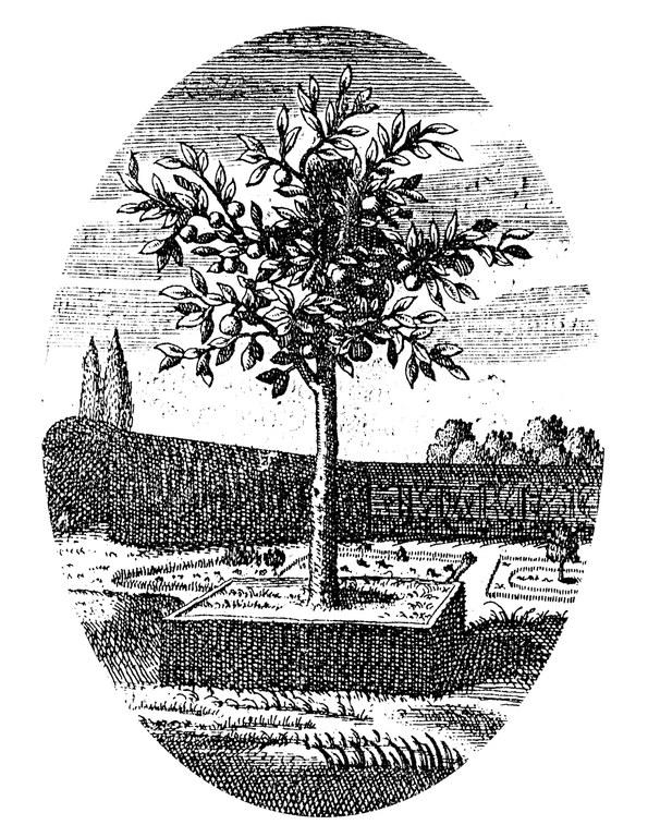 782-fruchtbaum-und-gartenkultur-323.webp