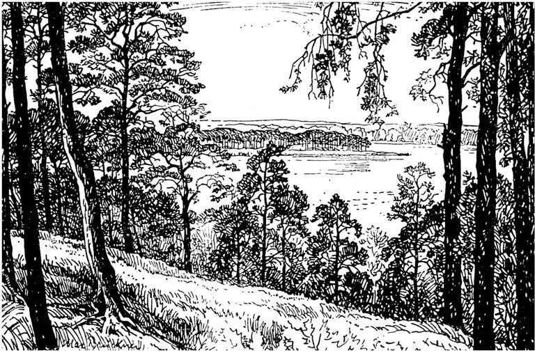 796-kiefernwald-331.webp